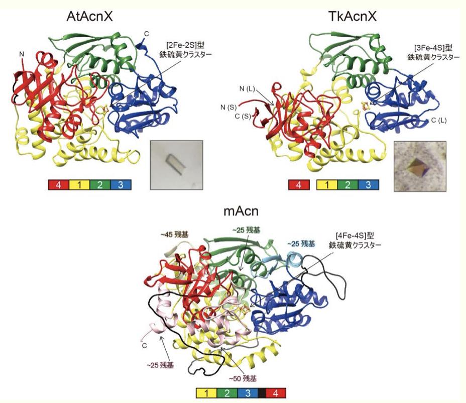 酵素のより原始的な祖先の姿が明らかに〜リクルート仮説を覆す証拠発見